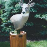 deer10 150x150 Deer