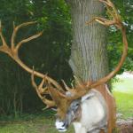 deer12 150x150 Deer