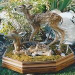 deer13 150x150 Deer