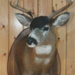 deer14 150x150 Deer