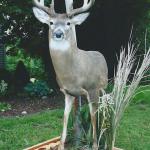 deer16 150x150 Deer