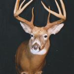 deer19 150x150 Deer
