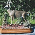 deer2 150x150 Deer