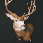 deer20 150x150 Deer