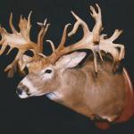 deer21 150x150 Deer