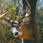 deer22 150x150 Deer