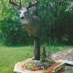 deer26 150x150 Deer