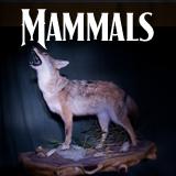 mammalsbutton Home