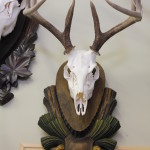 Taxidermy African, Elk,Cats 032